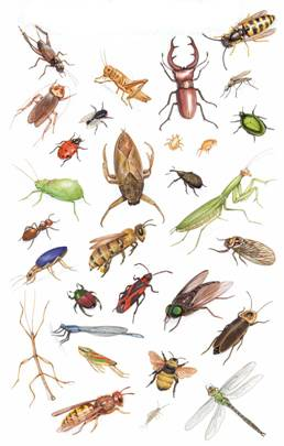 insectsgroups1